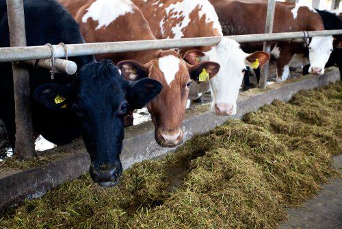 Миякимолзавод будет модернизирован и для его нужд построят новую молочную ферму