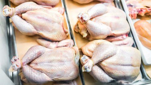 Красноярский край: На птицефабрике в Рыбинском районе обнаружен возбудитель сальмонеллеза