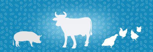 В ВОЗ рассказали о пользе антибиотиков в животноводстве