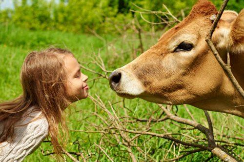 Какие витамины критически важны для здоровья коров