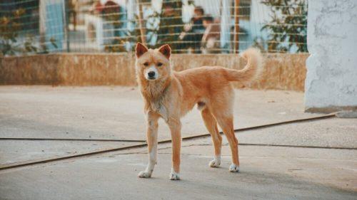 Власти Китая намерены исключать собак из категории скота и съедобных животных
