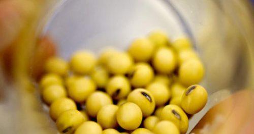 Дешевый соевый шрот с ГМО снивелирует рост цен на остальные ингредиенты кормов – мнение
