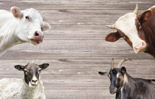 В МЭБ признали Россию свободной от двух опасных инфекций животных