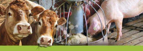 Животноводы опасаются дефицита витаминов и аминокислот и роста цен на них