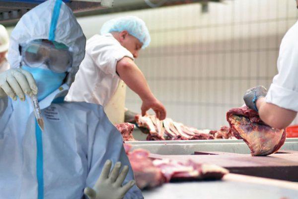 Коронавирус: почему на мясоперерабатывающих заводах было так много вспышек?
