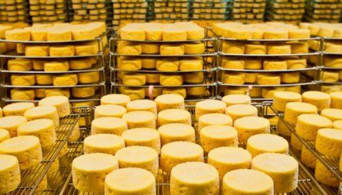 ООО «Хохланд Руссланд» открыло в Пензенской области производство твердых сыров