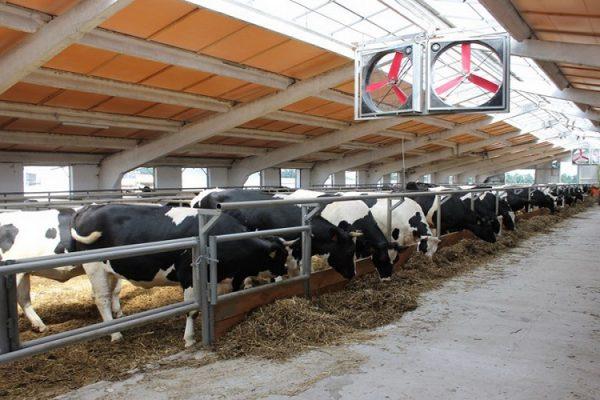 Текущий потенциал ввода новых молочных товарных ферм составляет 2,4 млн тонн – Андрей Дальнов