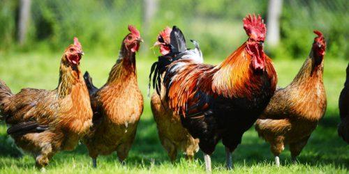 Производители мяса хотят смягчить требования к остаткам препаратов