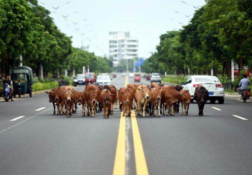 Какая продукция животноводства преобладает в российском агроэкспорте в Китай