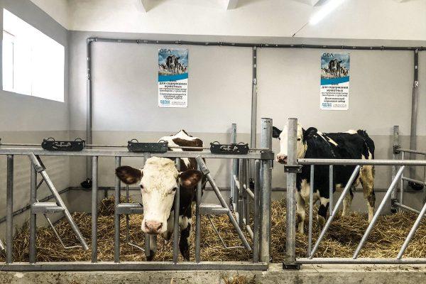 В России создадут цифровую модель производства молока для автоматизации работы ферм