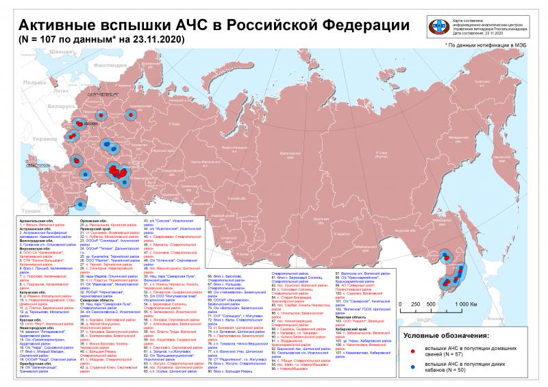 Российские ученые обеспокоены увеличением очагов АЧС в небольших хозяйствах