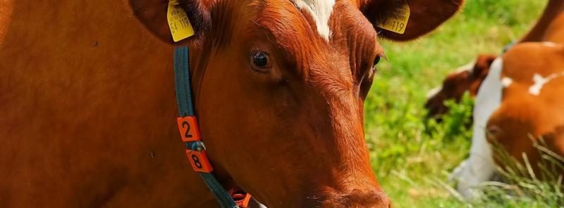 Когда в России введут обязательный поголовный учет животных