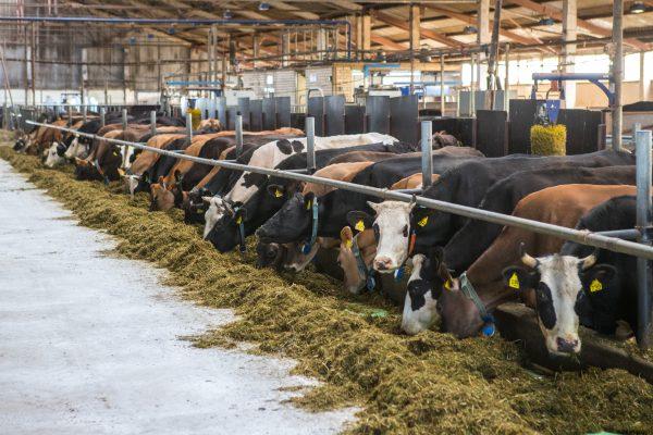 «АгриВолга» начинает строительство нового молочно-товарного комплекса