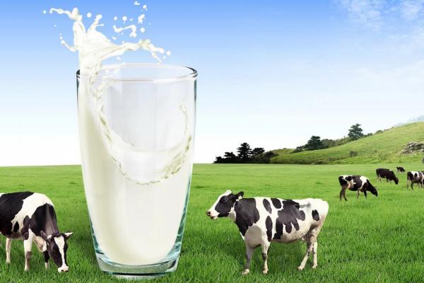 Тревожное будущее молока