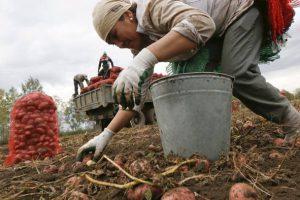 В Совфеде предлагают провести ревизию профессий, чтобы не допустить «зависимость от мигрантов»