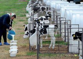 Итоги года 2020. Молоко и молочные продукты