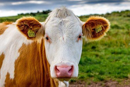 В Апастовском районе Татарстана построят два животноводческих комплекса на 400 коров каждый