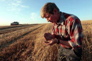 Пожары могут лишить фермеров субсидий