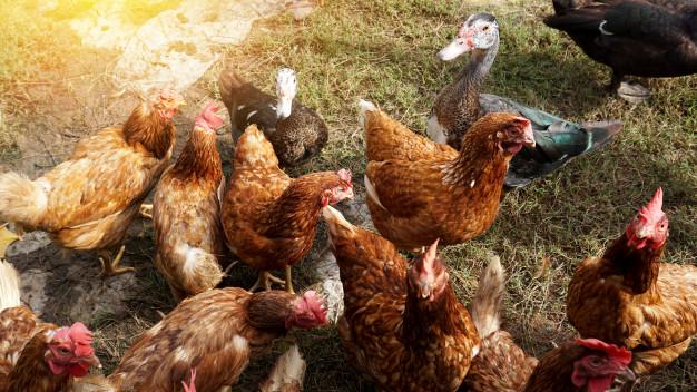 От человека к человеку: Роспотребнадзор заявил о мутации птичьего гриппа