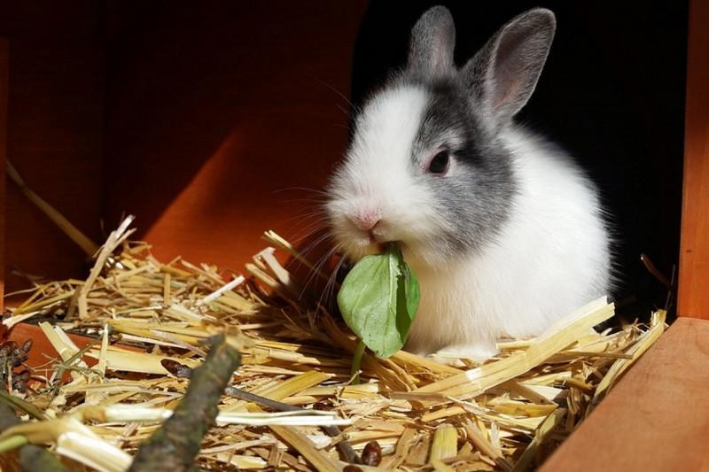 Открытые проволочные полы и другие недостатки современного кролиководства в обзоре чешских ветеринаров