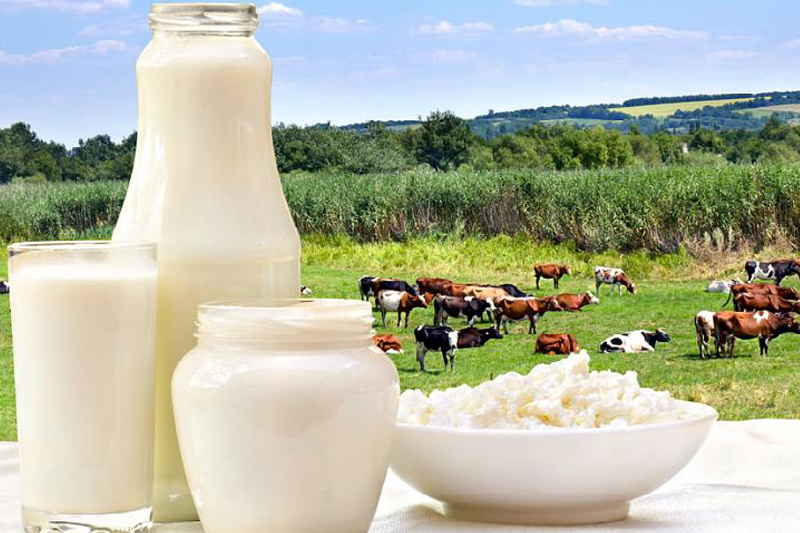 Производство сырого молока сохраняет положительную динамику – Артем Белов