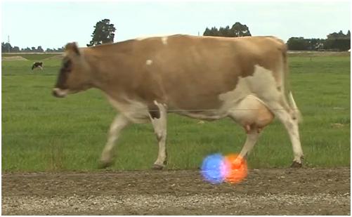 Автоматизация для профилактики хромоты коров