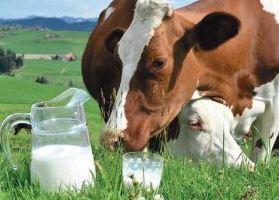 Молочный рынок: основные тенденции