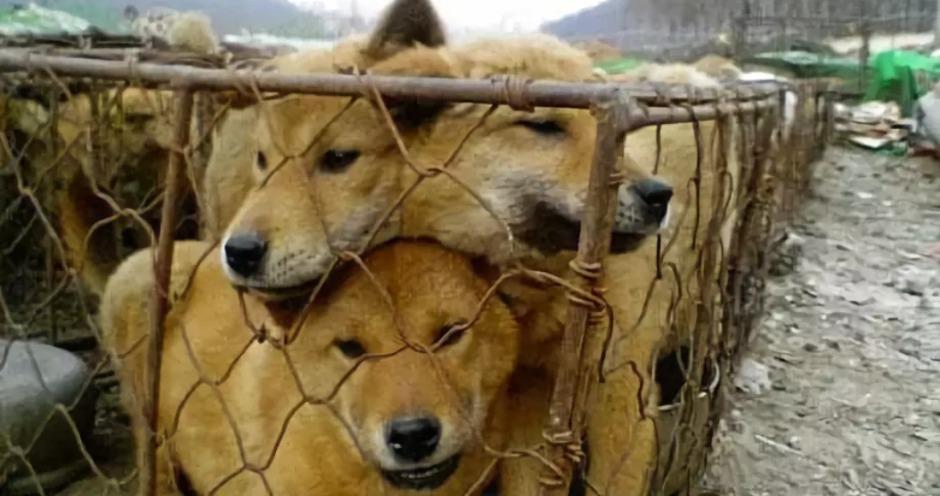 Президент Южной Кореи предложил законодательно запретить употребление в пищу собачьего мяса