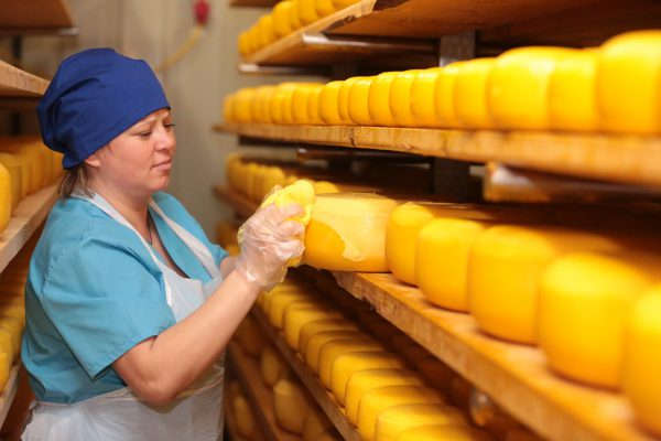 Олег Малащенко: Объемы производства сыра в Ленинградской области выросли благодаря крафтовым сыроварням