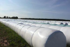 На форуме «Молоко России» расскажут о преимуществах «Сенажа в линию»