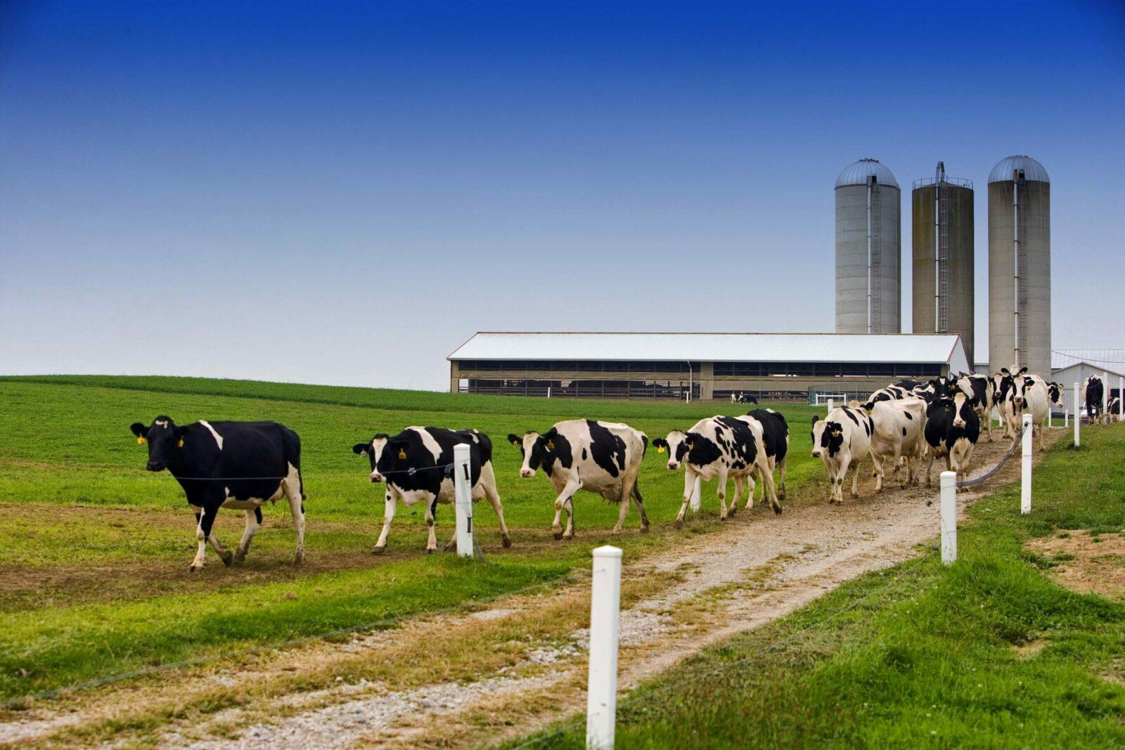 В Инннополисе разрабатывают систему управления молочной фермой на основе компьютерного зрения